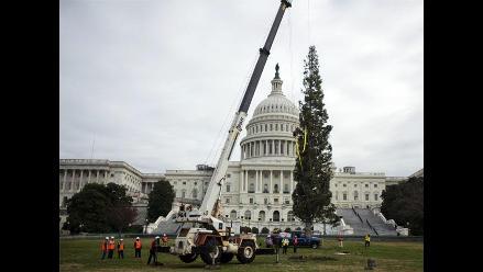 Gran árbol de Navidad llegó al Capitolio