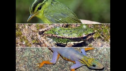 Fotografían nuevas especies descubiertas en Vietnam