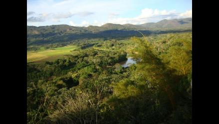 San Martín: Hallan 20 hectáreas de sembríos de coca en Alto Mayo