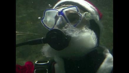 Papá Noel visita a los tiburones