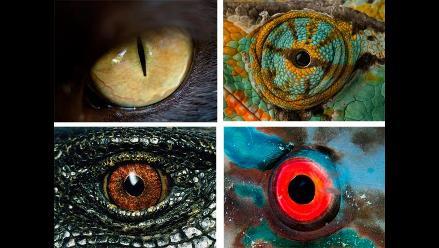 Vea asombrosas fotografías de los ojos de animales