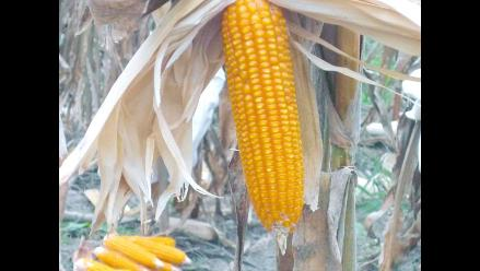 Chicago: maíz, soja y trigo inician 2012 en fuerte alza