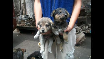 Urgente cachorritos necesitan familia