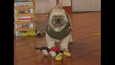 Familia busca desesperadamente a perrito robado de veterinaria