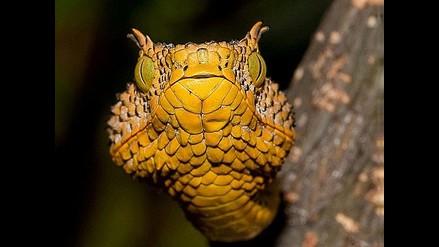 Descubren nueva especie de serpiente en Tanzania