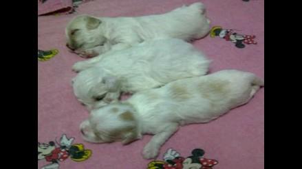 El nacimiento de los cachorros de Sasha