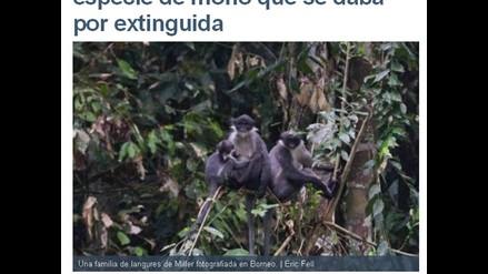 Hallan en Borneo monos que se creían extintos