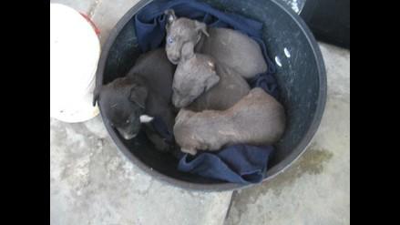 Cuatro cachorritos abandonados en pista del Metropolitano