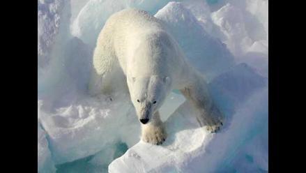 Deshielo ártico amenaza población de osos polares