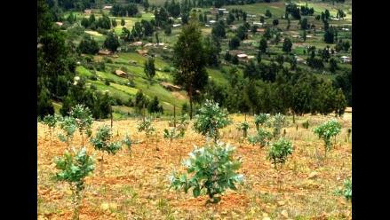 España: padres plantan un árbol en honor a sus recién nacidos