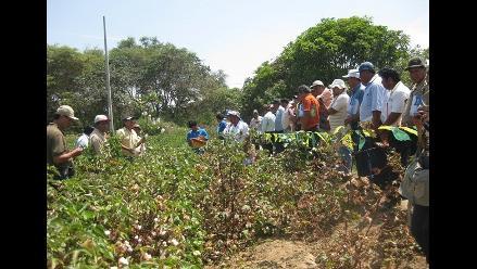 Algodoneros acatarán un paro agrario en Pisco