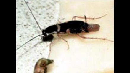 Por San Valentín: Ponle el nombre de tu enamorado a una cucaracha