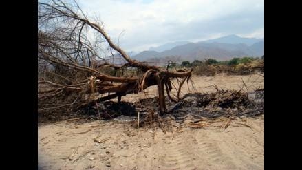 Lambayeque: Asesor del Congreso verifica deforestación en La Puntilla