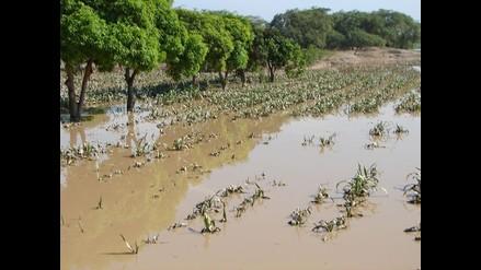 Áncash: Desborde del río Santa dañó seis hectáreas de cultivo