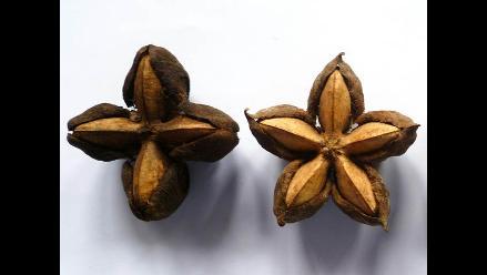 Prueban aceite de sacha inchi contra el colesterol y triglicéridos
