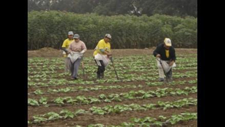 Cajamarca tiene 0% de inversión en infraestructura agrícola con canon