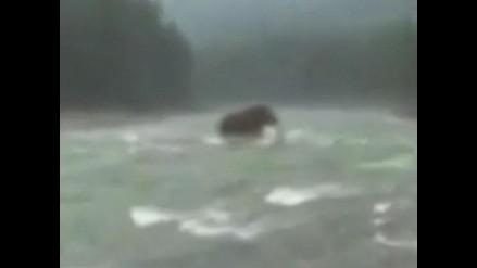 Video de supuesto mamut en Siberia causa polémica