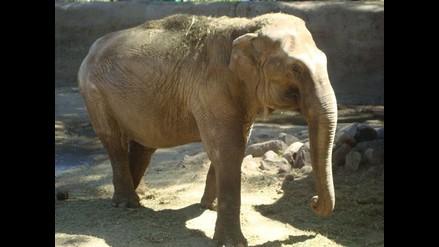 Matan 200 elefantes en Camerún para vender su marfil