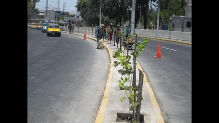 Lima no cumple con el mínimo de áreas verdes