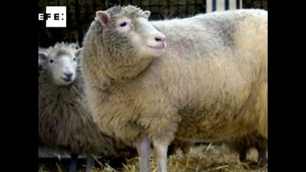 A 15 años del anuncio de la clonación de la oveja Dolly