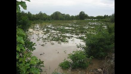 Tumbes: Desbordes de ríos destruyen 2 644 hectáreas de cultivos