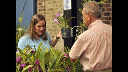 Más de 2.000 especies se muestran en la Exposición de Orquídeas