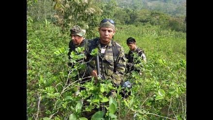 Perú está a 800 hectáreas de coca para igualar a Colombia, según ONU