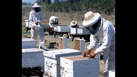 Resina de abejas puede combatir la caries y la hipertensión