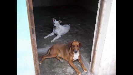 Dominga y Tyson siguen buscando casita