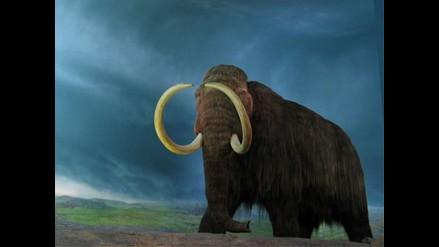 Rusia y Corea del Sur acuerdan clonar al mamut
