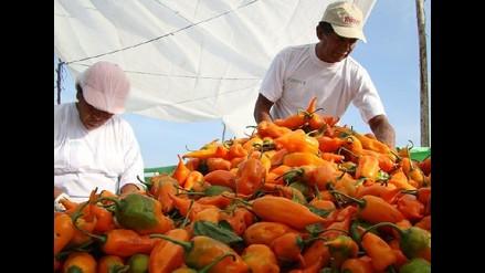 Se formaliza alianza con agricultores de ají amarillo en norte y sur de Lima