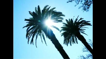 Las palmeras son las plantas más útiles de Sudamérica
