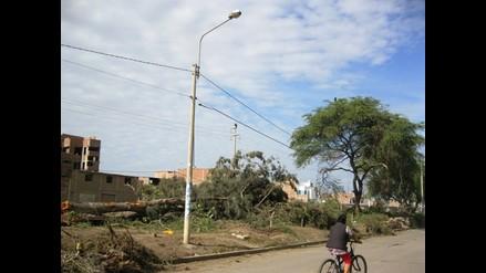 Depredan decenas de árboles de diversas variedades en Chiclayo