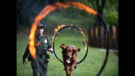 Intenso entrenamiento canino en Colombia