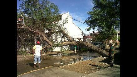 La Libertad: Docente fallece luego de que un árbol le cayera