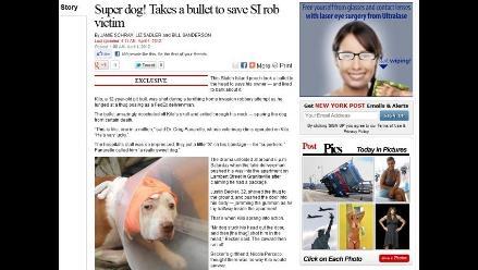 Perro recibió un disparo en la cabeza para salvar a su dueño