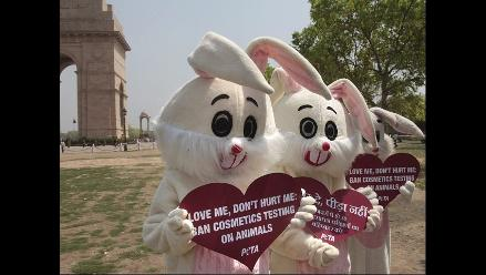 PETA protesta contra uso de animales en pruebas cosmeticas en la India