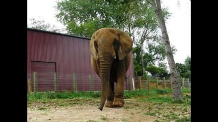 Elefante mató a veterinaria de zoológico en Nueva Zelanda