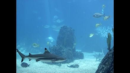 En Día de Biodiversidad advierten sobre alarmante situación de océanos