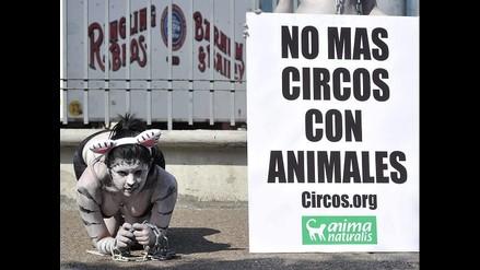 Activistas de AnimaNaturalis rechazan uso de animales en los circos