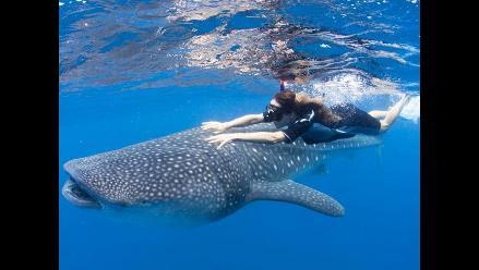 Wild Aid y su lucha por la conservación de ballenas