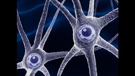 Convierten células de sangre del cordón umbilical en neuronas