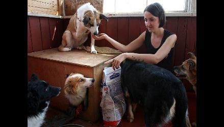 Voluntarios buscan apoyo para cuidar perros abandonados en Bielorrusia