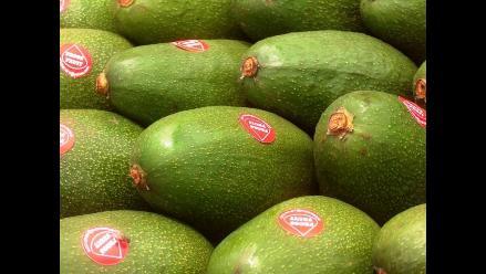 Exportación de palta peruana suma US$50 millones entre enero y mayo
