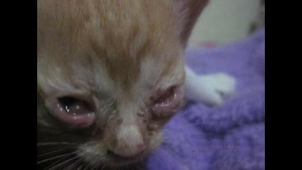Se necesita urgente gotas para gatitos bebés o quedarán ciegos