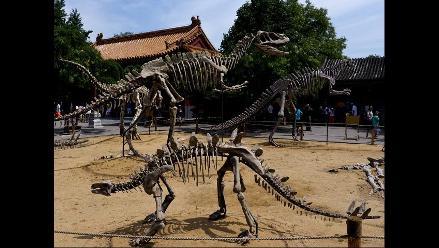 Fósiles de dinosaurios son la atracción en parque público de Pekín
