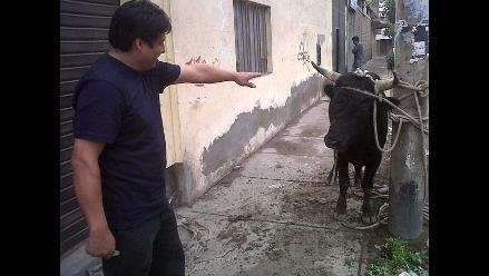 Identifican a persona que fue embestida por toro en VES