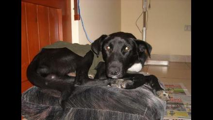 Noble perrito salvado de ser envenenado busca hogar
