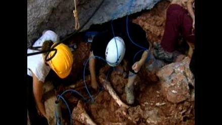 Hallan en Barcelona esqueleto de elefante que vivió hace 100 mil años
