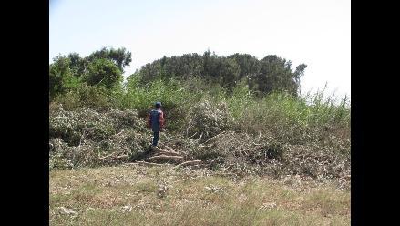 Trujillo: Denuncian tala de árboles para ejecución de obras ediles